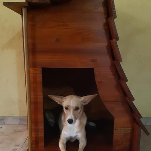 Cucha para perro mediano