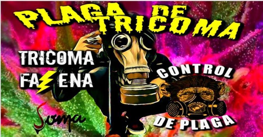 Plaga De Tricoma En Soma Bar